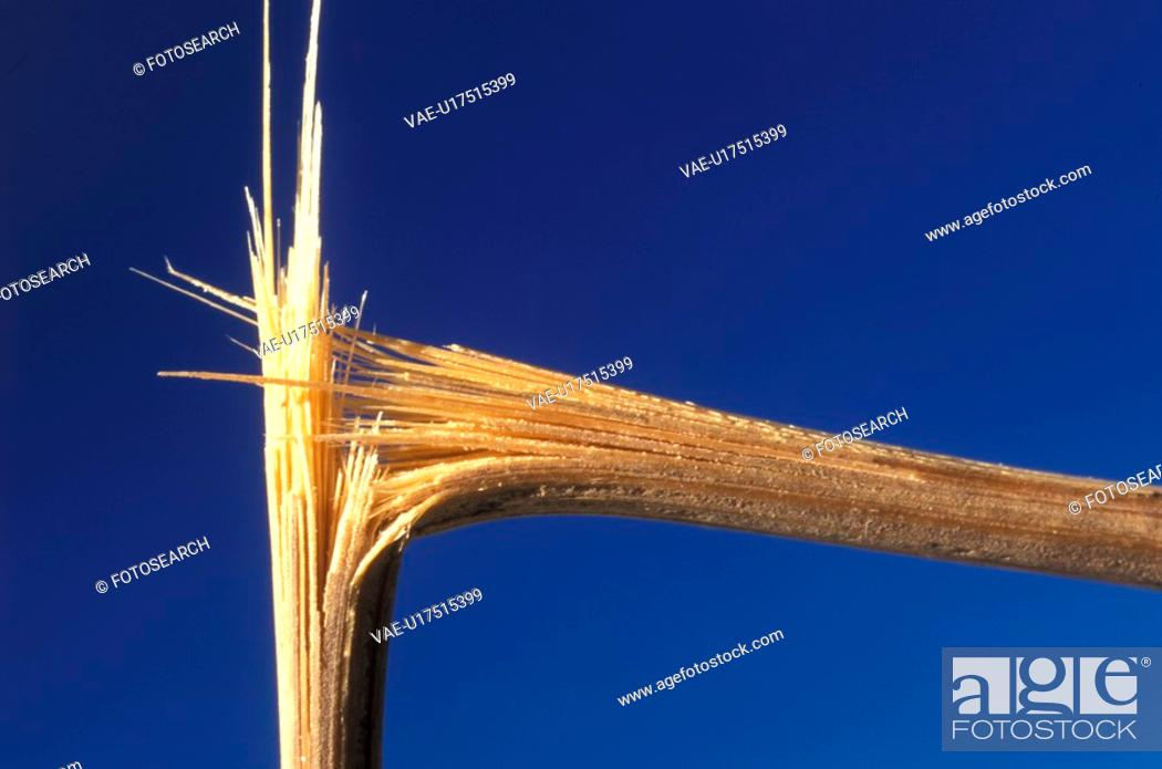 Stock Photo: beige, Bernhard, blue, bough, branch.