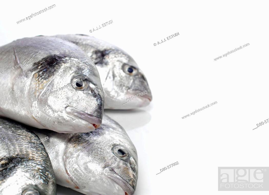 Stock Photo: Sea breams.
