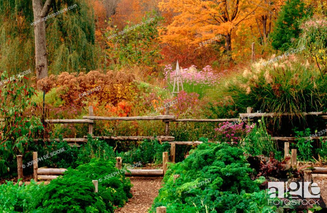 Stock Photo: New England Vegetable and Perennial gardenin the autumn.