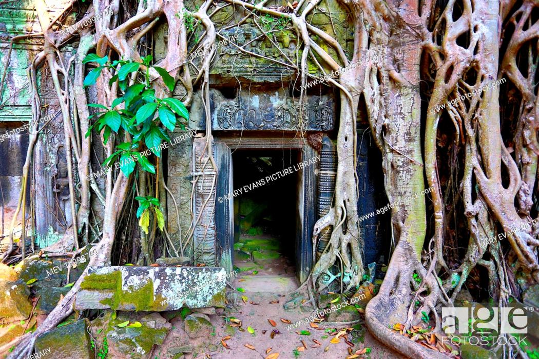 Stock Photo: Giant tree roots at Ta Phrom, Khmer Temple in Angkor, Siem Reap, Cambodia.