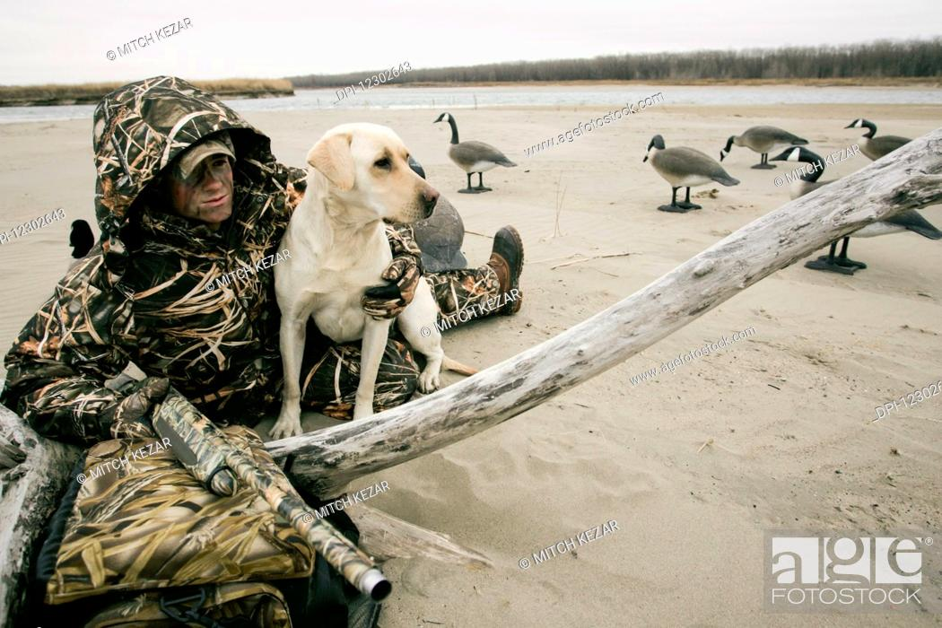 Stock Photo: Waterfowl Hunter Hunting With Yellow Lab.