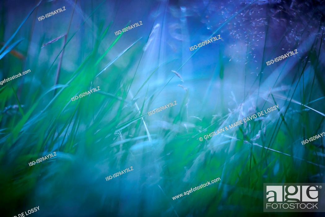 Stock Photo: Close up of long grass.