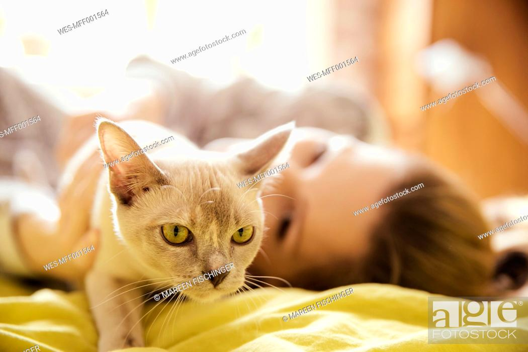 Stock Photo: Woman with Burmese cat at home.