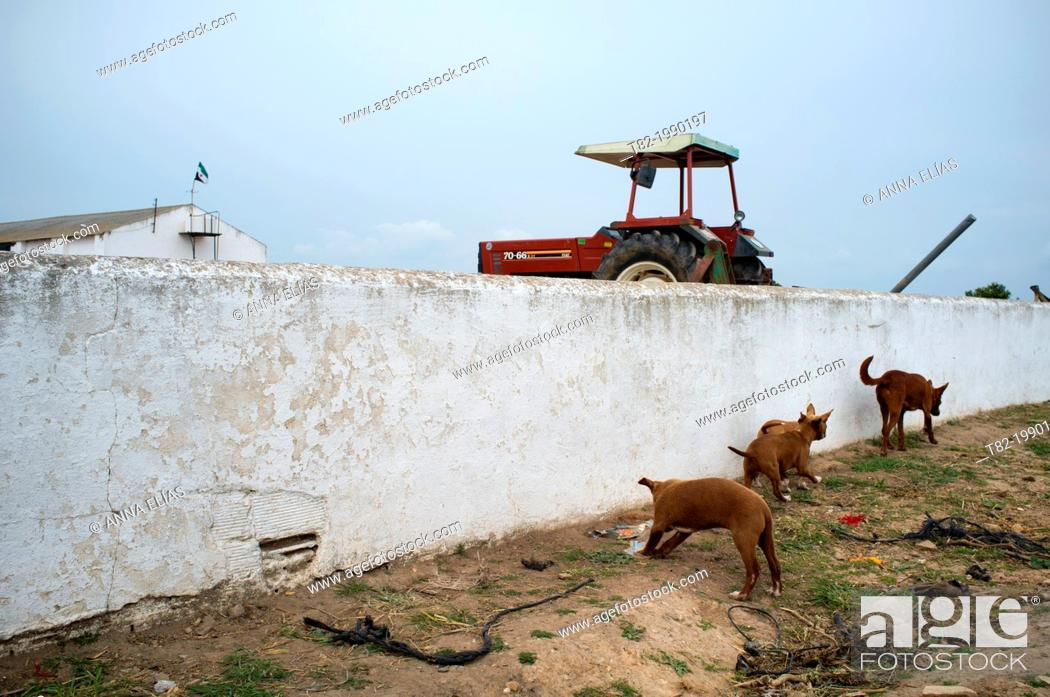 Stock Photo: Family of young dogs playing in a rural farm, Palma del Rio, Cordoba, Andalucia, Spain.