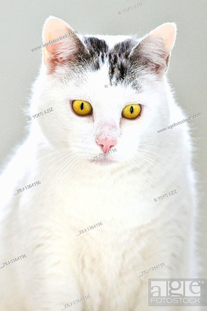 Stock Photo: cat.