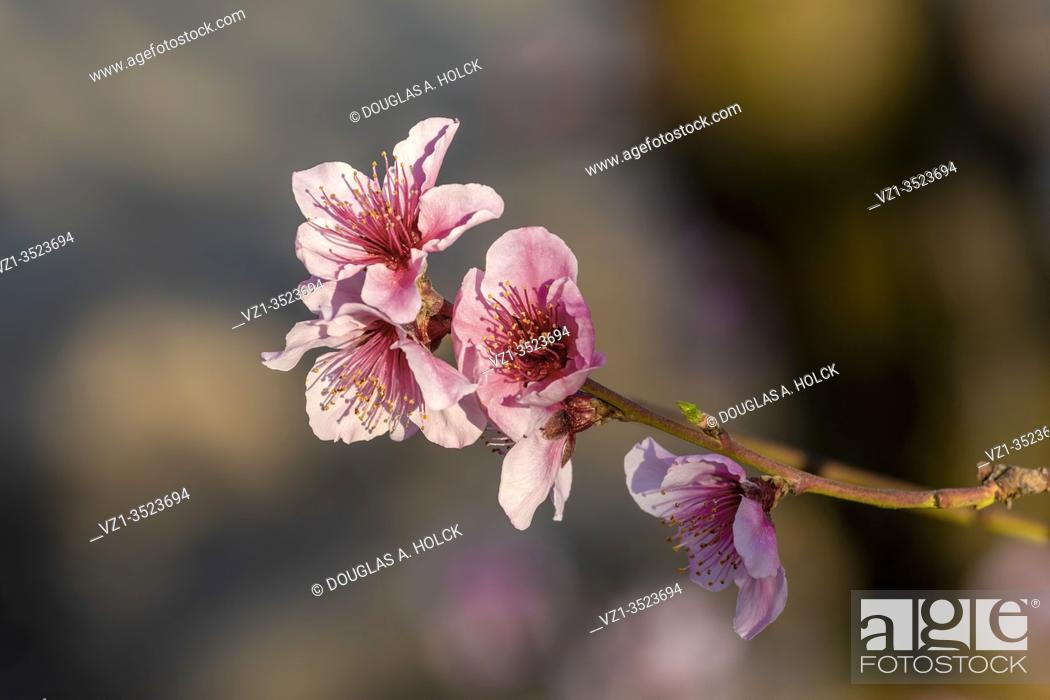 Stock Photo: Blossoms Reaching for the Sun.
