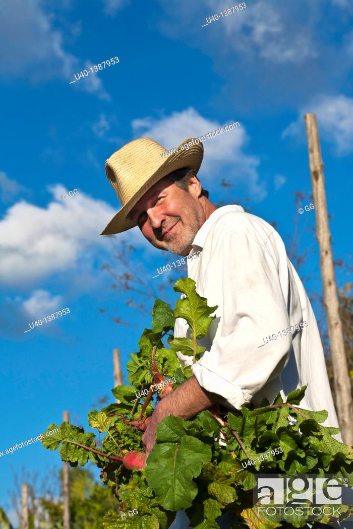 Stock Photo: man picking radishes.