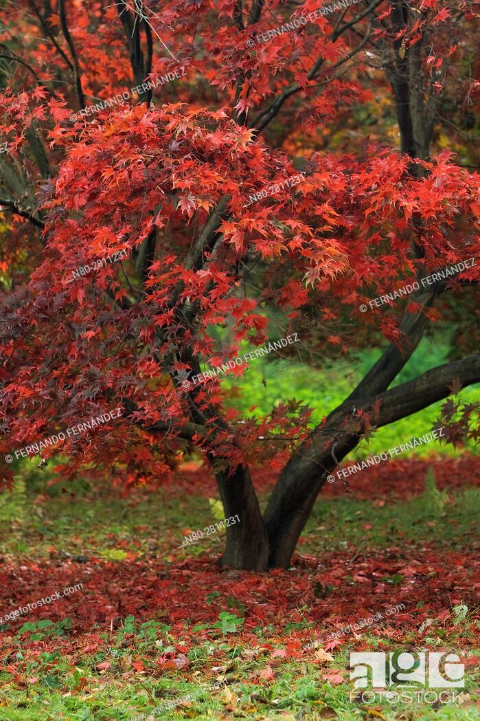 Stock Photo: Winkworth Arboretum. National Trust. Godalming. Surrey. England.