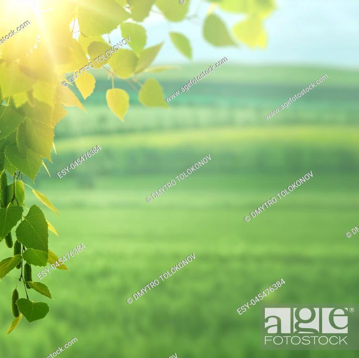 Stock Photo: On the summer meadow, seasonal environment.