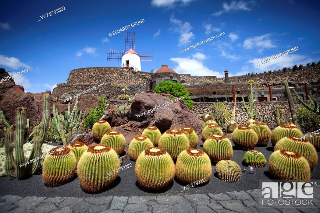 Stock Photo: The Lanzarote Cactus Garden is a Cactarium located in an old quarry of volcanic sand extraction (picón) that Lanzarote farmers use to cover their crops and thus.