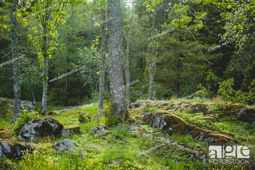 Stock Photo: Biodiverse landscape.