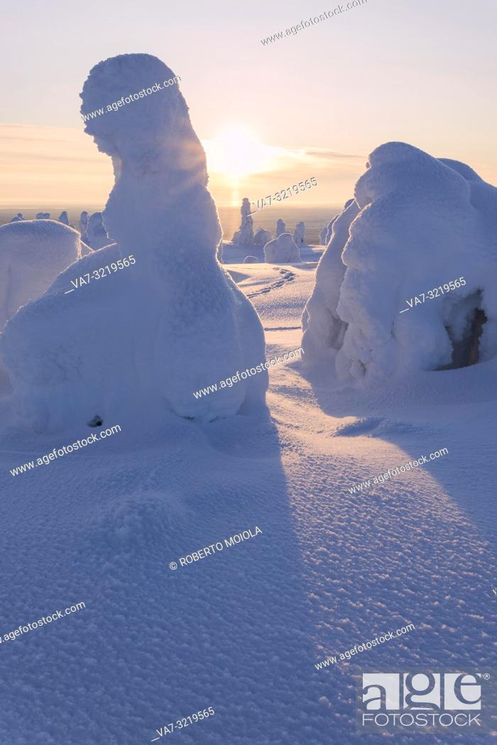 Imagen: Sun rays on snow covered trees, Riisitunturi National Park, Posio, Lapland, Finland.