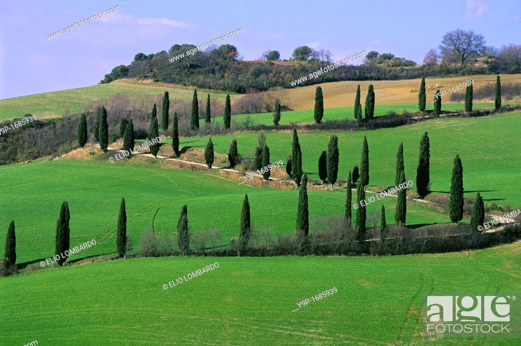 Stock Photo: Val d'Orcia, near Pienza, Siena, Tuscany, Italy.