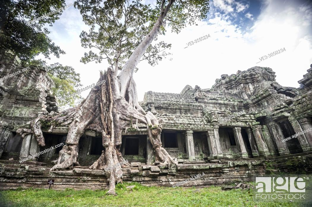 Stock Photo: A tree roots growing over the Preah Khan temple, Angkor Complex (Siem Reap Province, Cambodia).