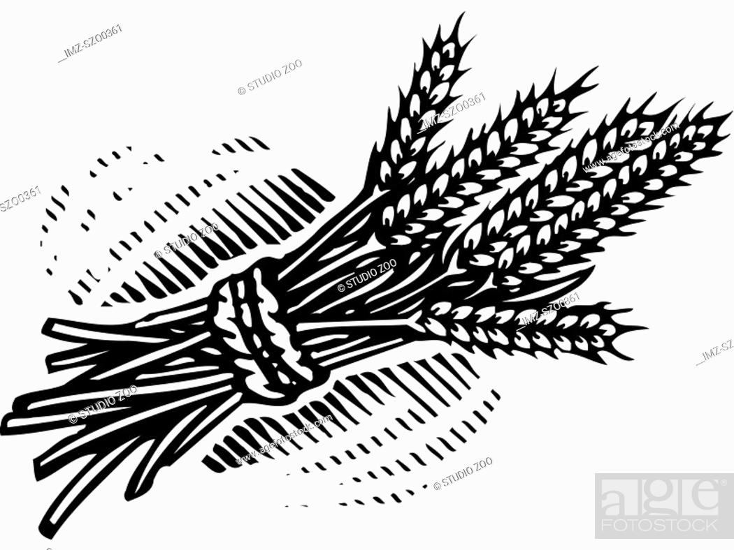 Stock Photo: An illustration of a bundle of wheat illustrated in black and white.