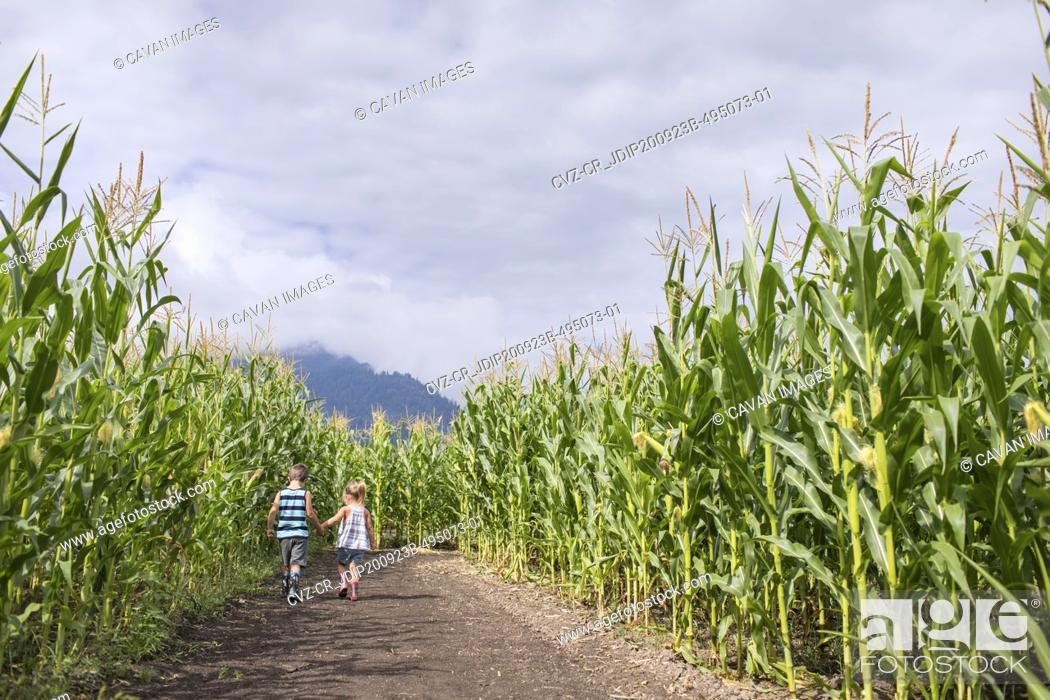Photo de stock: Young boy and girl holding hands while in corn maze.