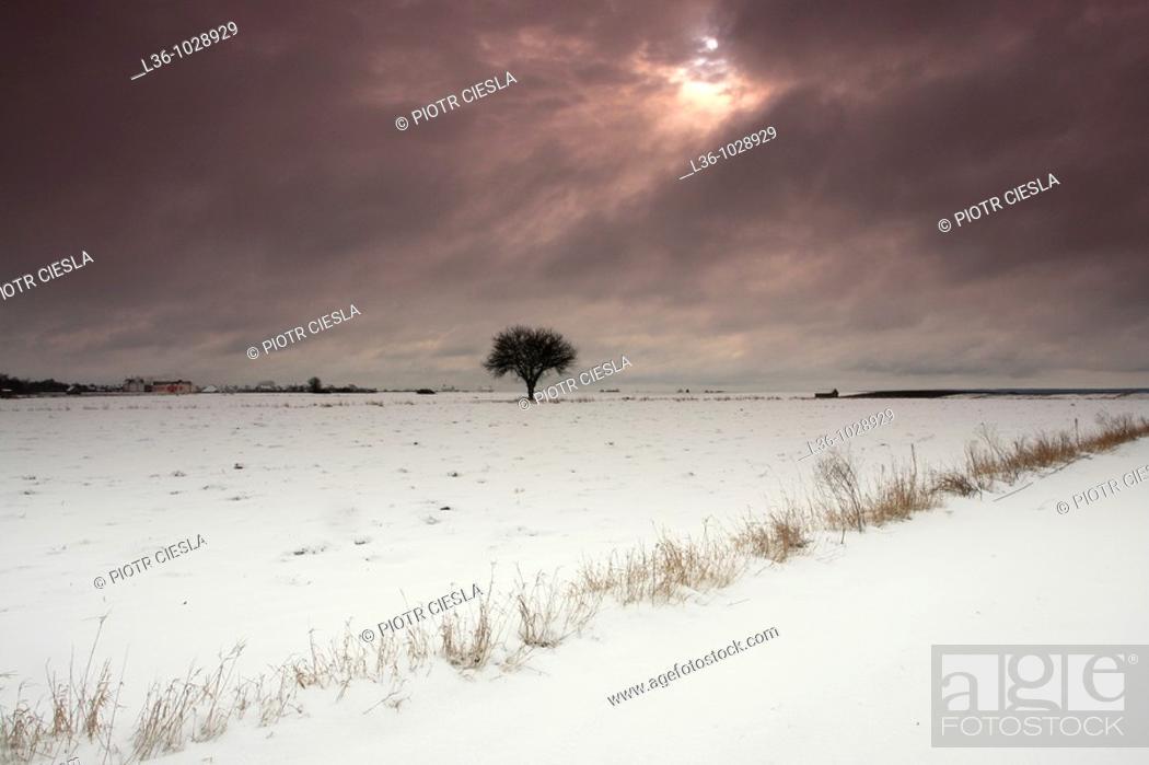 Stock Photo: Winter near Drohiczyn  Eastern Poland.