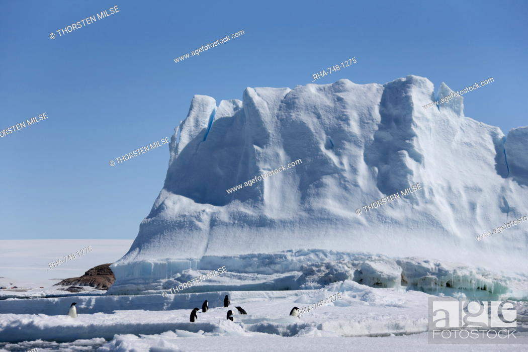 Stock Photo: Adelie penguins Pygoscelis adeliae, in front of an iceberg, Dumont d'Urville, Antarctica, Polar Regions.
