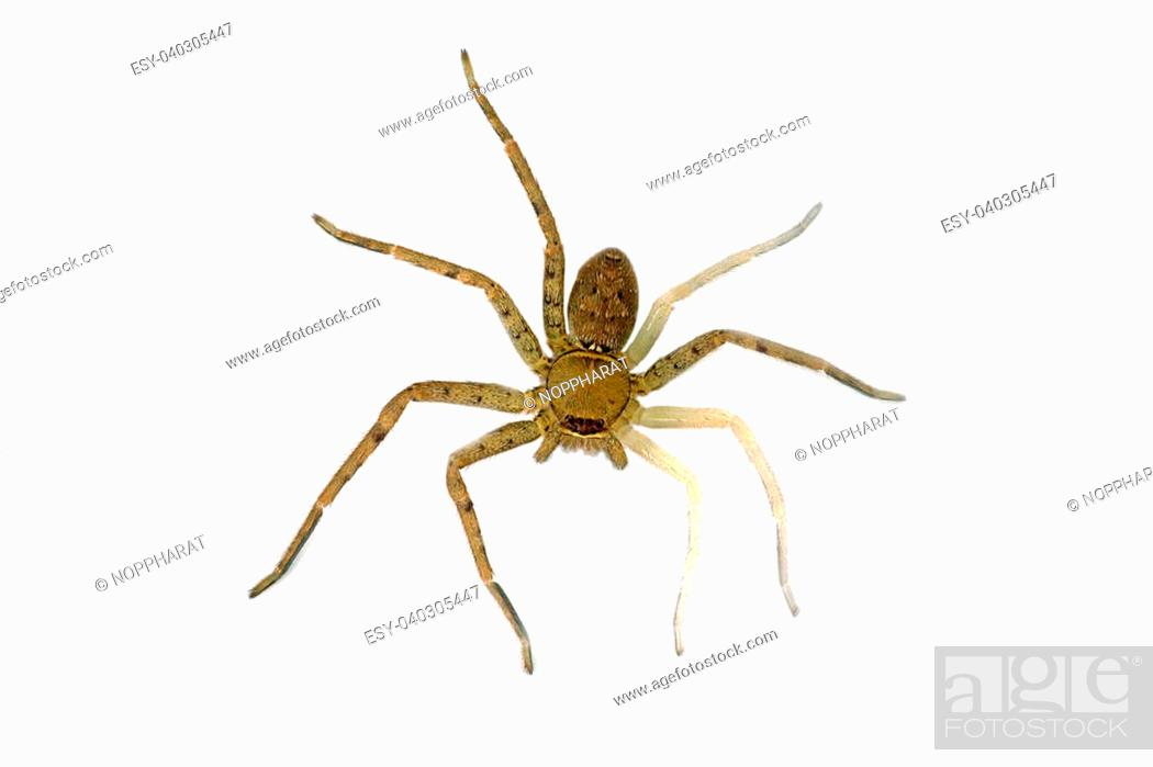 Stock Photo: Spiders are molting.