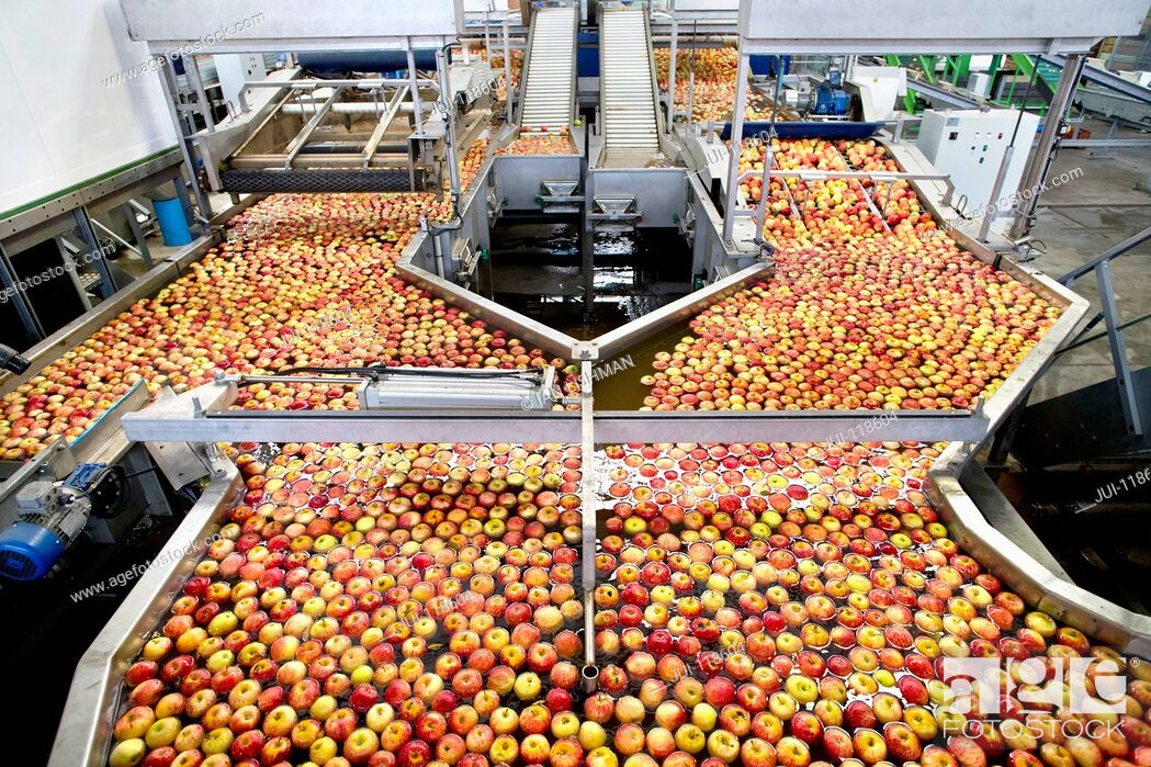 Stock Photo: Apples Being Washed And Graded In Fruit Processing Plant.