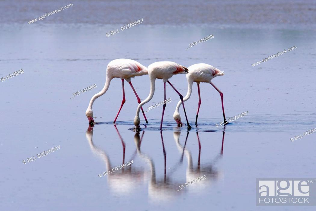 Stock Photo: Flamingos - Lake Ndutu, Tanzania.