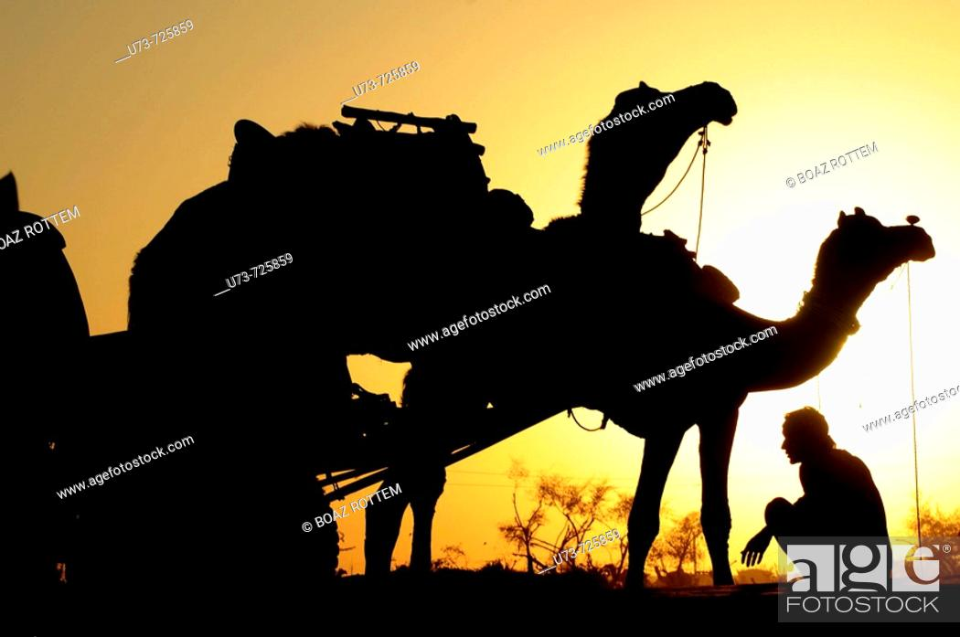 Stock Photo: Resting after a very long day in the camel fair, Naguar, Rajasthan, India.