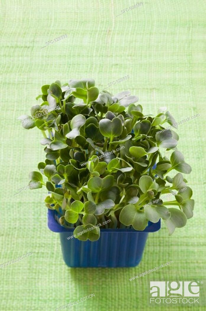 Stock Photo: Daikon cress in plastic punnet.