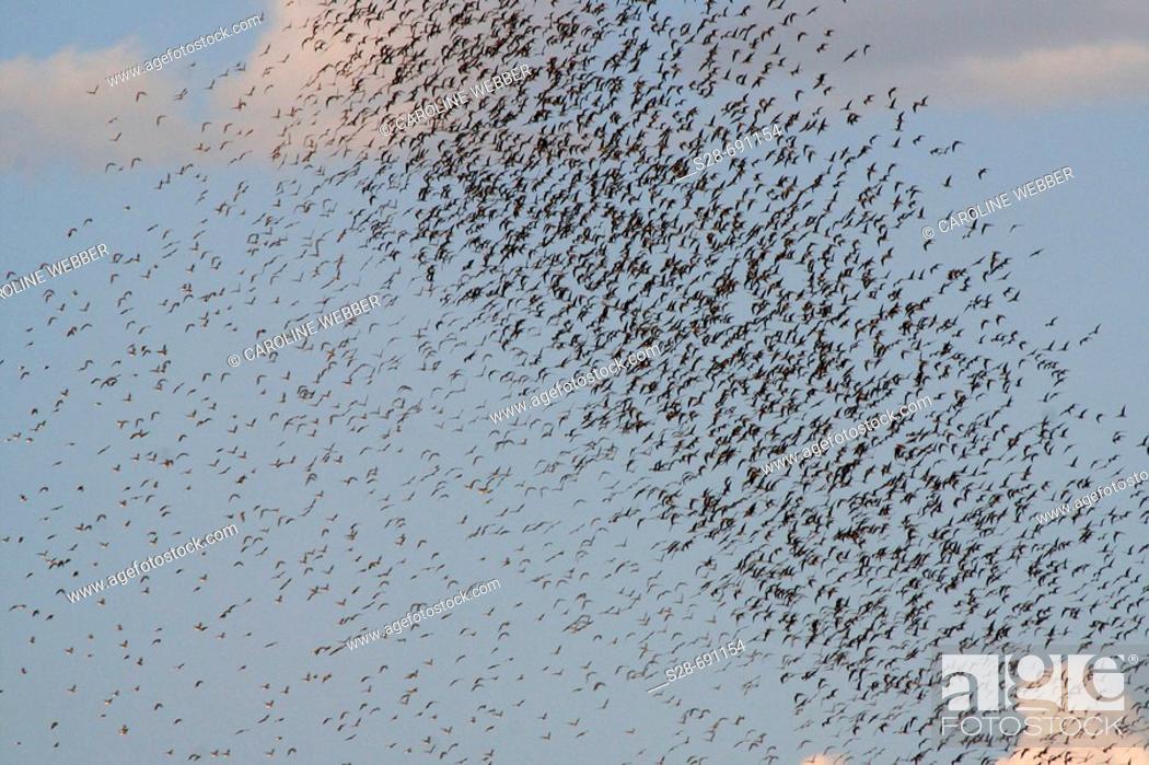 Stock Photo: Flocks of birds at Chobe National Park. Botswana.