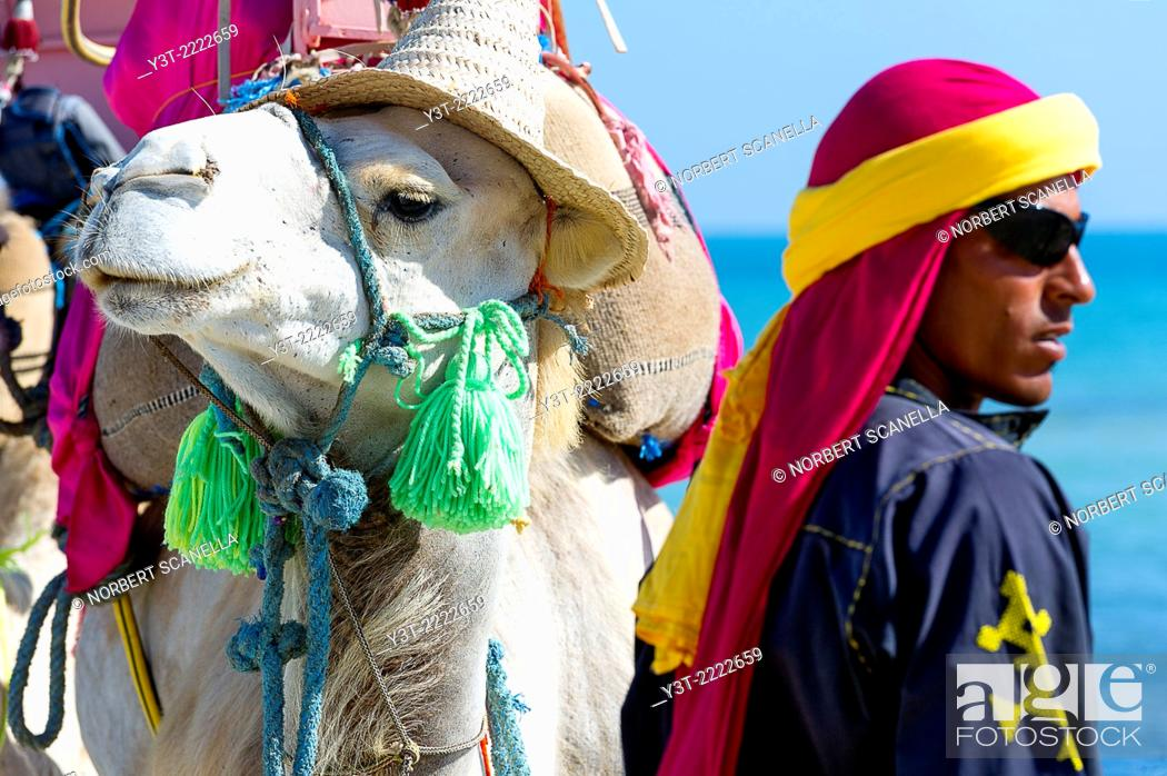 Stock Photo: Africa, North Africa, Maghreb, South Tunisia, Governorat of Medenine. Djerba island. Beach of Sidi Mehrez, camel and camel driver.