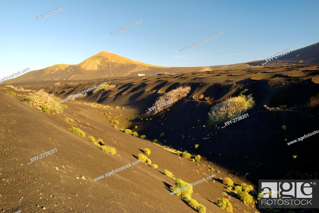 Stock Photo: Lanzarote, Canary Islands. Typical volcanic ash soil landscape. Cinder stone wind shelter vine cultivation niches near La Geria.