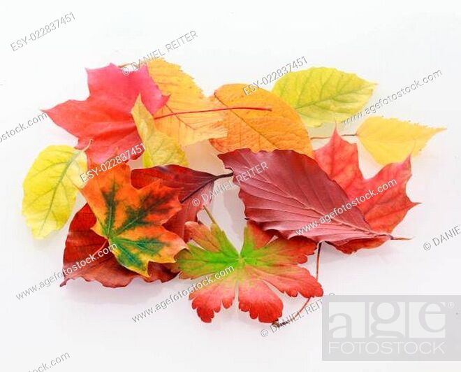 Imagen: Heap of colorful faded autumn leaves.
