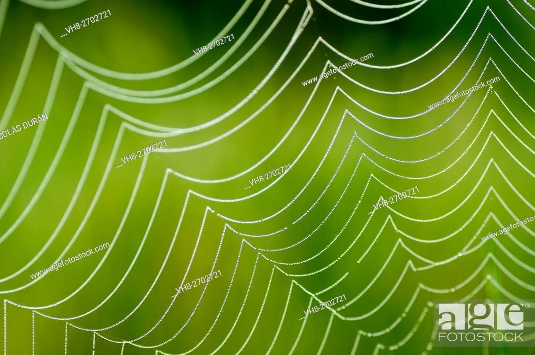 Stock Photo: Spider web. Extremadura. Spain.