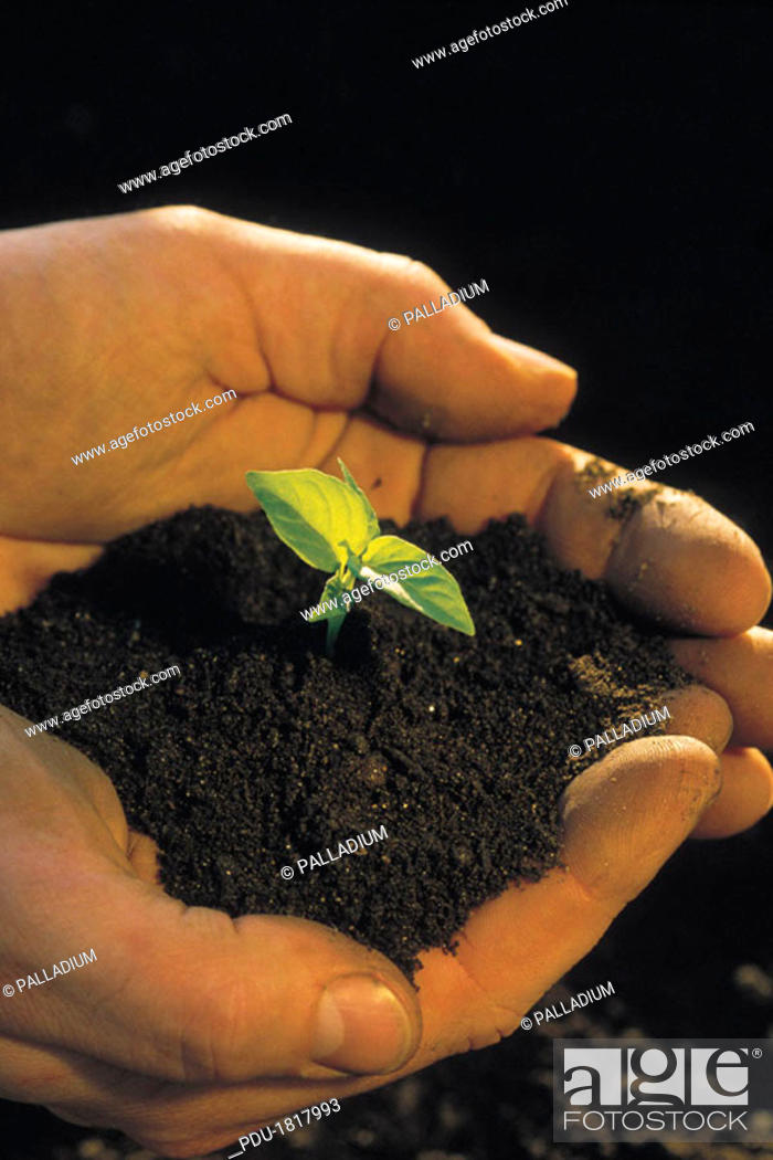 Stock Photo: PERSON HOLDING PLANT SEEDLING.