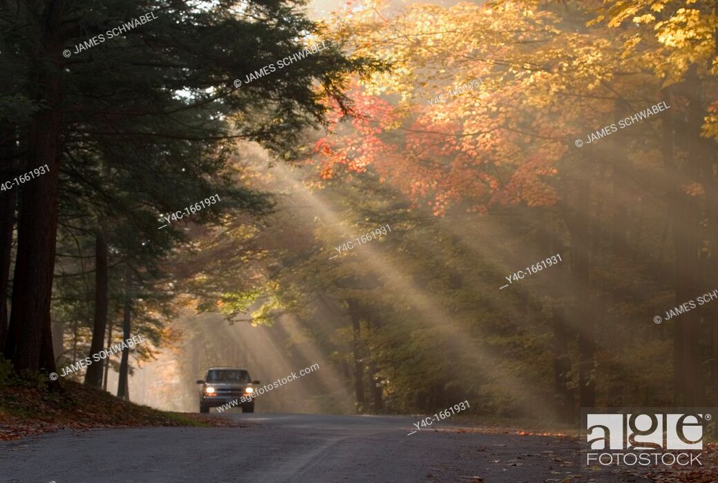 Stock Photo: Lone car on road in backlit fog in fall colored trees in Chestnut Ridge Park in Western New York State.