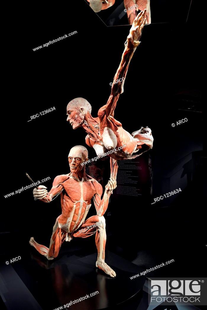 Plastinat, tanzendes Paar, Dr  Gunter von Hagens, MeMu
