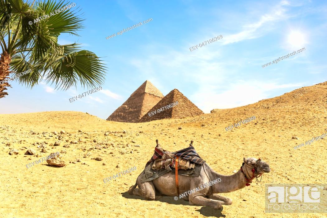 Imagen: Desert scenery with the Pyramids, a camel amd palm trees, Egypt.
