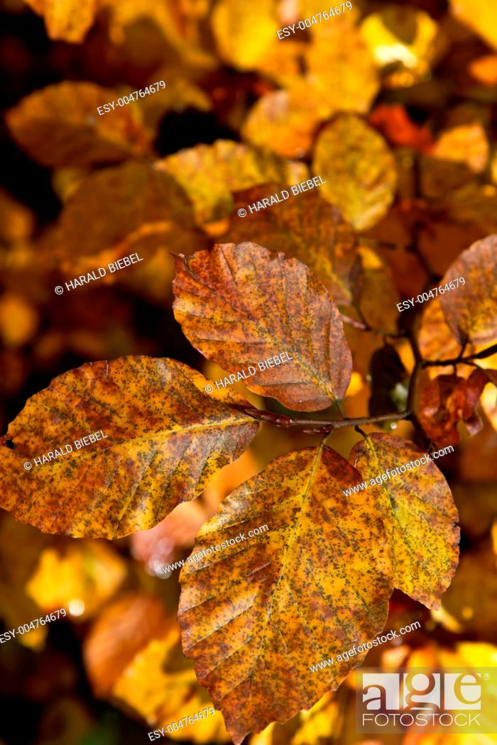 Stock Photo: Goldener Oktober.
