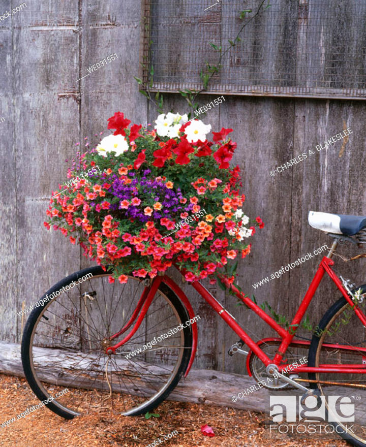 Stock Photo: Bicycle with flower leaning against garden shed. Anacortes. Fidalgo Island, Skagit County. Washington. USA.