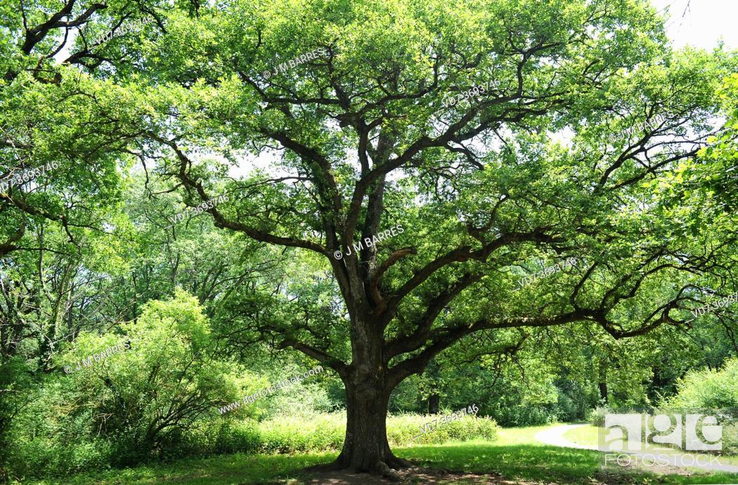Imagen: Oak forest of Orgi. Ultzama valley, Navarra, Spain.