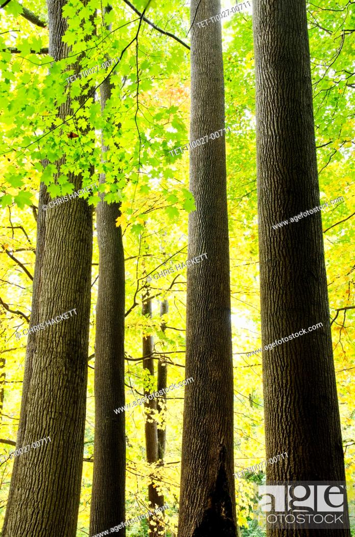 Stock Photo: USA, New Jersey, Trees in autumn.