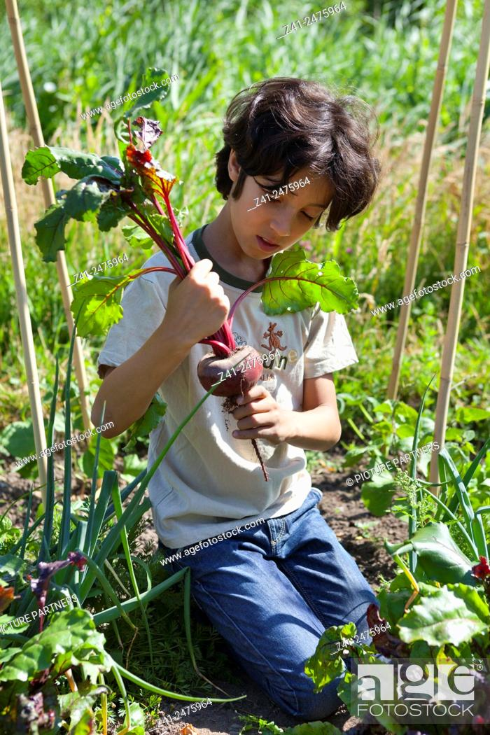 Stock Photo: Little boy in the vegetable garden looking at a fresh picked red beet.