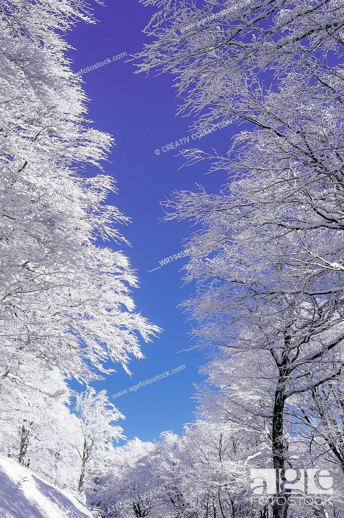 Stock Photo: Nature, Sky, Winter, Blue, Scenic, Tree, Country, Season, Snow, Cerulean, Azure, Cold Temperature, Landscape, Blue Sky