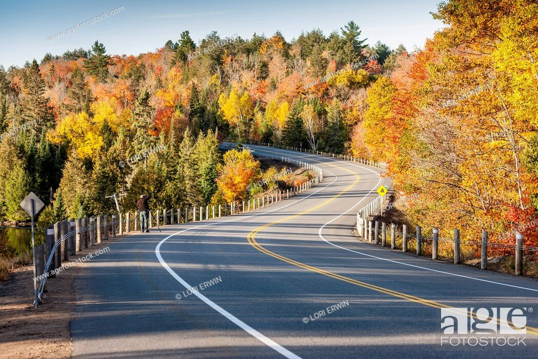 Stock Photo: Photographer on Highway 60 in Autumn in Algonquin Provincial Park, Ontario.