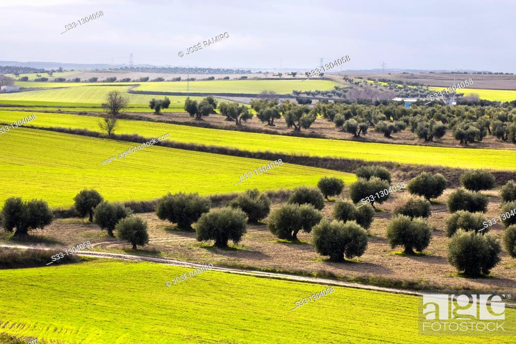 Stock Photo: Farmlands in Pinto, Madrid province, Spain.