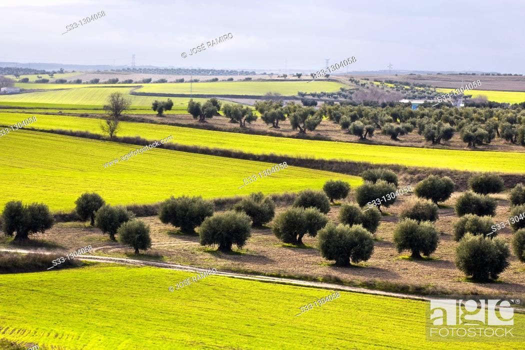 Stock Photo: Farmlands in Pinto, Madrid province, Spain.