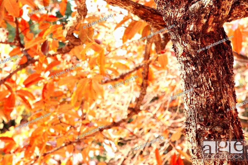 Stock Photo: fall leaves tree.