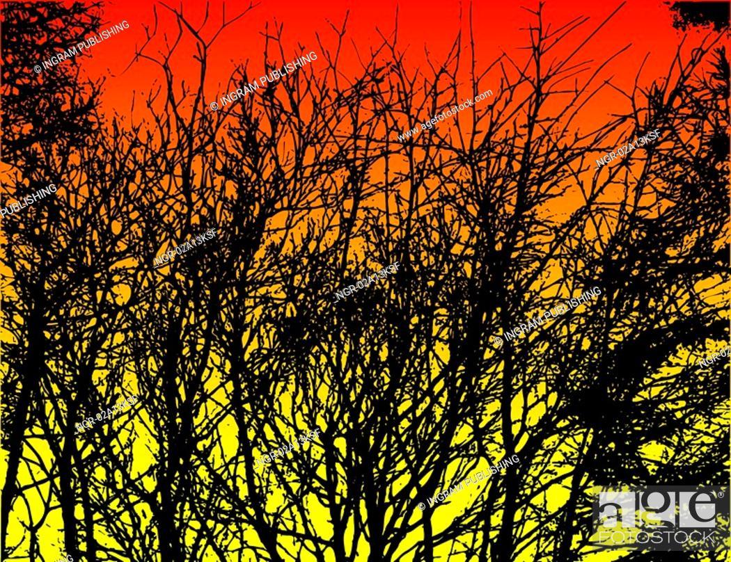Stock Photo: trees at sunset.