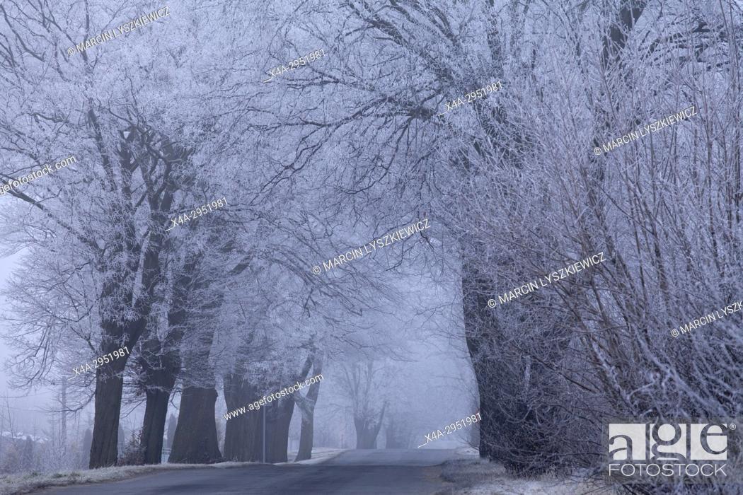 Stock Photo: Road in Winter, North Poland.