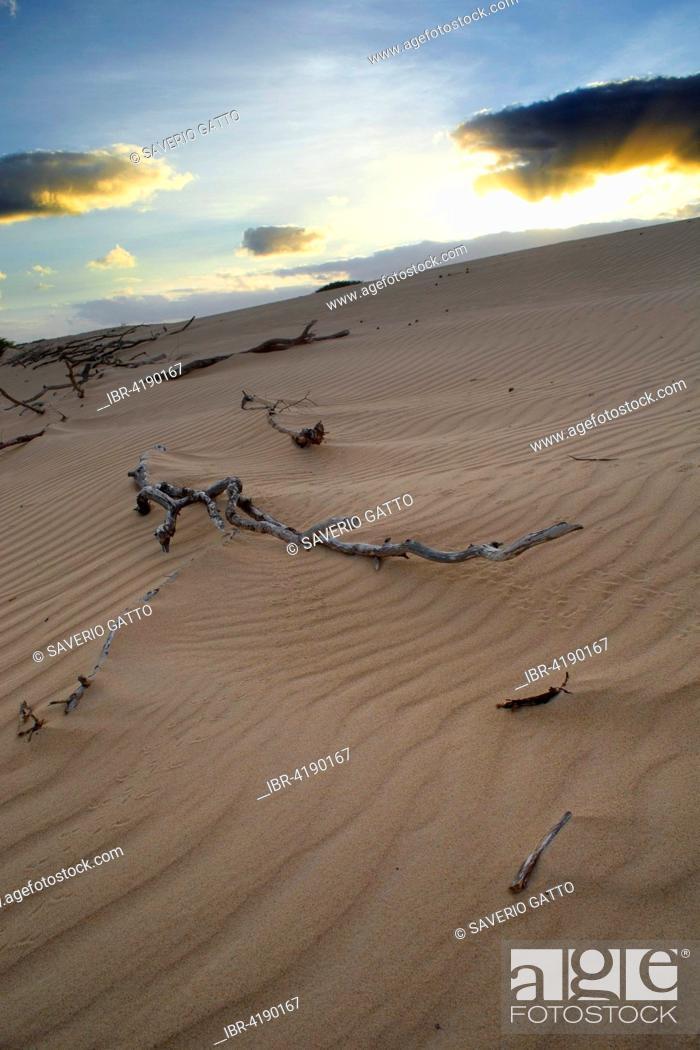 Stock Photo: Sand dunes, dawn, Boavista, Cape Verde.