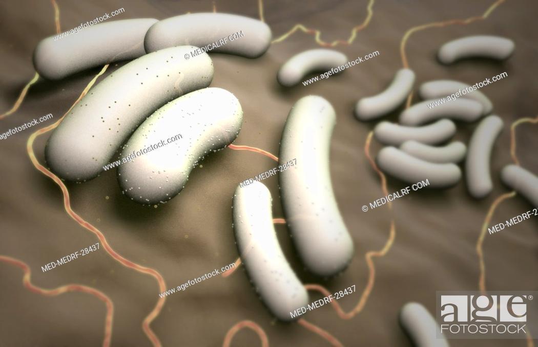 Stock Photo: Escherichia coli.